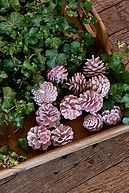 SEASONAL PINECONES PINK